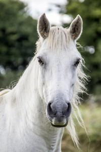horse-1637400_1920